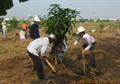 Tin ảnh: Ngày hội trồng cây tại Tổng kho Xăng dầu Nhà Bè